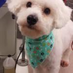 Mobile-dog-groomer-lutz