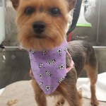 Mobile-dog-groomer-wesley-chapel