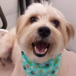 Mobile-pet-grooming-dade-city