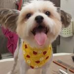 mobile-dog-grooming-zephyrhills