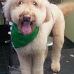 Dog Grooming Lutz