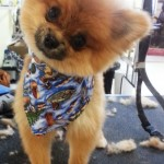 Dog Grooming New Tampa