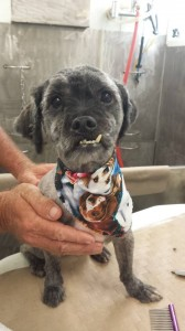 dog-mobile-groomer-dade-city-fl