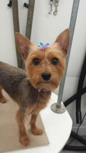 dog-mobile-groomer-near-grand-hampton-fl