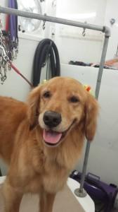 dog-mobile-groomer-zephyrhills-fl