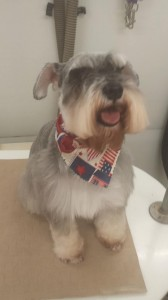 dog-mobile-grooming-wesley-chapel-fl