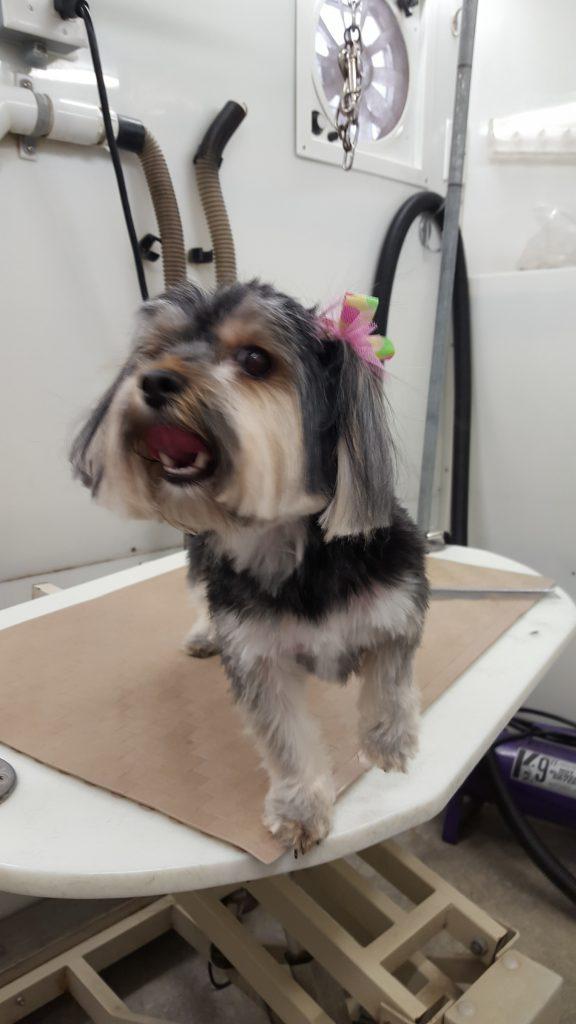 Convenience Park N Bark Mobile Dog Grooming
